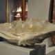 Muschelversteinerung, 20 Milionen Jahre
